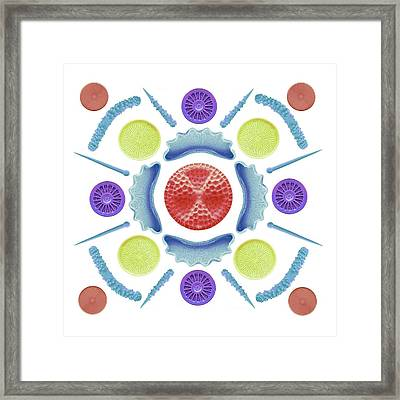 Diatoms And Sponge Spicules Framed Print by Steve Gschmeissner