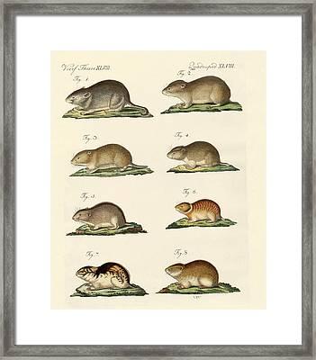 Different Kinds Of Mice Framed Print by Splendid Art Prints