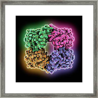 Dihydrodipicolinate Synthase Enzyme Framed Print by Laguna Design