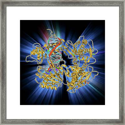 Dna Clamp Complexed With Dna Molecule Framed Print by Laguna Design