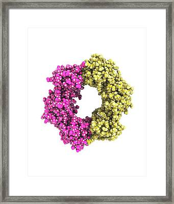 Dna Clamp Framed Print by Ramon Andrade 3dciencia
