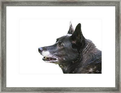 Dog Head Profile Isolated On White Framed Print by Donald  Erickson