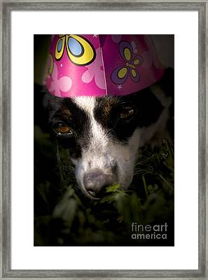 Dog Tired Party Animal Framed Print by Jorgo Photography - Wall Art Gallery