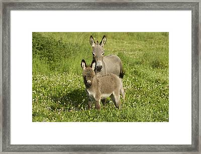 Donkey With Foal Framed Print by Jean-Michel Labat