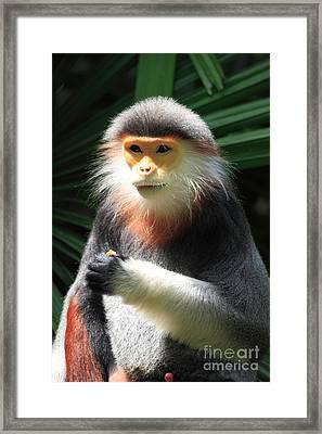 Douc Langur Framed Print by Sohns/Okapia