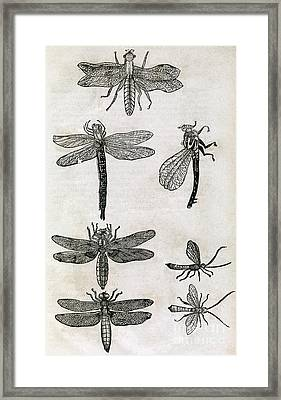 Dragonflies, 17th Century Artwork Framed Print by Middle Temple Library