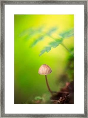 Dream Mushroom Framed Print by Dirk Ercken