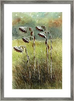 Dried Up Sunflower Patch Framed Print by Steven Schultz