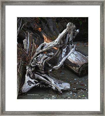Driftwood On The Beach Framed Print by Tom Janca