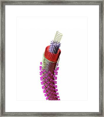 Ebola Virus Particle Framed Print by Russell Kightley