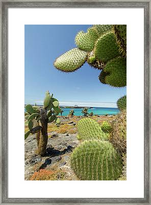 Ecuador, Galapagos, South Plaza Island Framed Print by Cindy Miller Hopkins