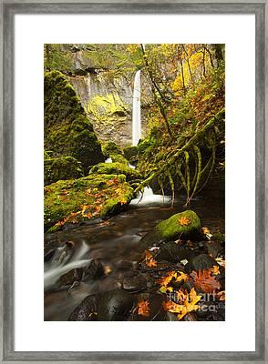 Elowah Autumn Framed Print by Mike  Dawson