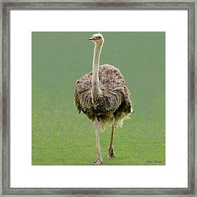 Emu Framed Print by Ellen Henneke