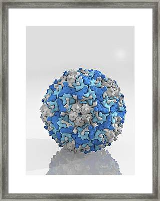 Enterovirus Particle Framed Print by Science Photo Library
