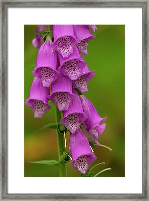 Europe, Scotland, Cairngorm National Framed Print by Jaynes Gallery