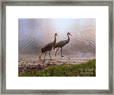 Evening At The Lake Framed Print by Zina Stromberg