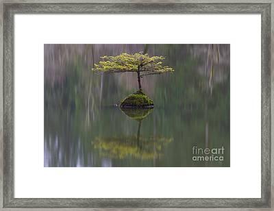Fairy Lake Fir Framed Print by Carrie Cole