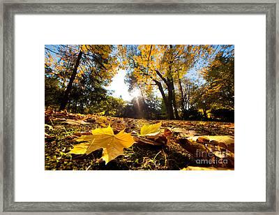 Fall Autumn Park. Falling Leaves Framed Print by Michal Bednarek
