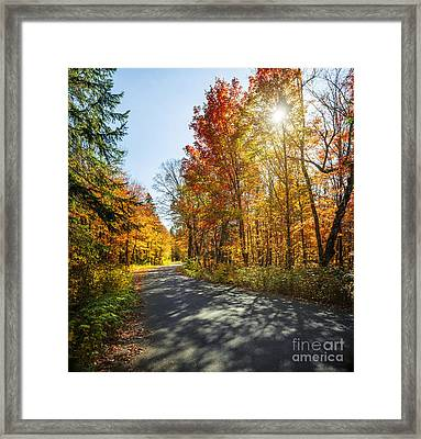 Fall Forest Road Framed Print by Elena Elisseeva