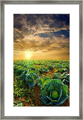 Fall Harvest Framed Print by Phil Koch