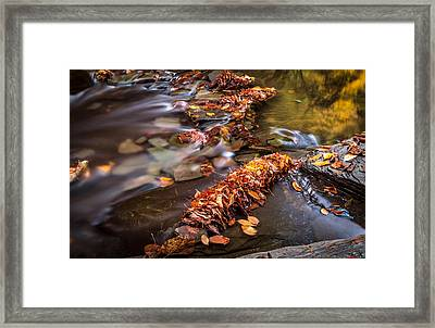 Fall Leaves Framed Print by Gary Fossaceca