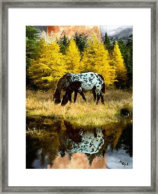Fall Reflections Framed Print by Roger D Hale