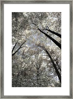 Fall Trees Framed Print by Judy Gallagher