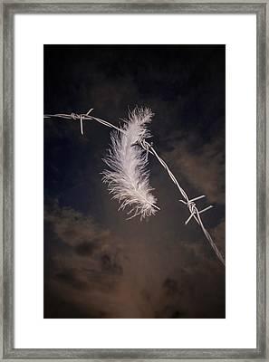Feather Framed Print by Joana Kruse