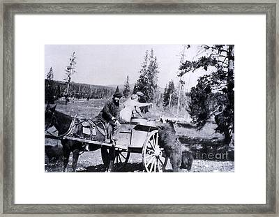 Feeding Bear Yellowstone National Park Framed Print by NPS Photo