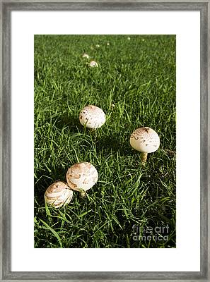 Field Of Mushrooms Framed Print by Jorgo Photography - Wall Art Gallery