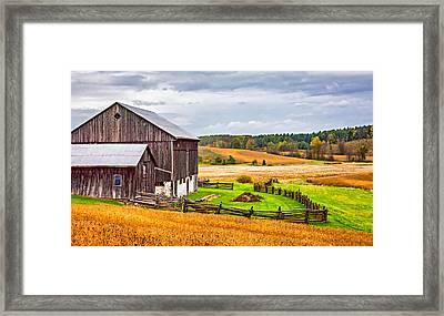 Fields Of Gold Framed Print by Steve Harrington