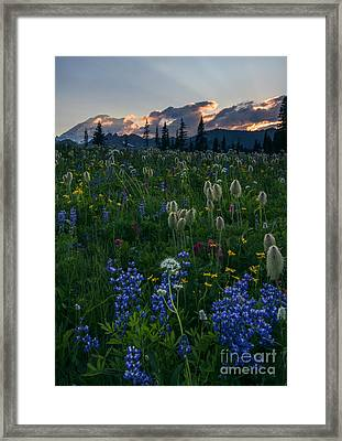 Fields Of Paradise Framed Print by Mike Dawson