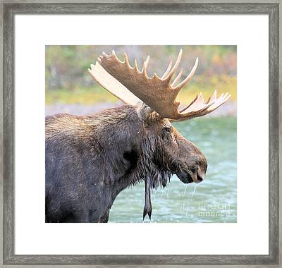 Fishercap Lunch Framed Print by Adam Jewell