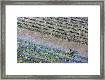 Fishing Boat Sailing Through Bamboo Framed Print by Keren Su