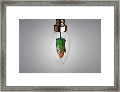 Flower In Bulb Framed Print by Bess Hamiti