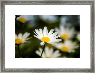 Flower Framed Print by Mirra Photography