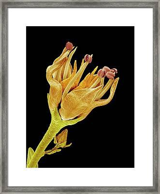 Flower Framed Print by Susumu Nishinaga