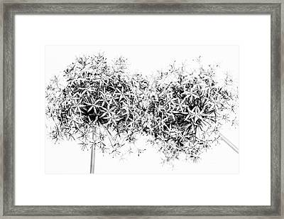 Flowering Onions Framed Print by Elena Elisseeva
