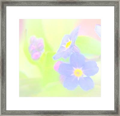 Forget Me Not Framed Print by Kathleen Luther