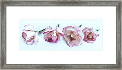 Four Roses Framed Print by Marianna Mills