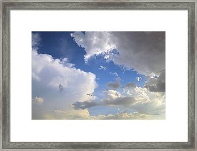 Free As A Bird Framed Print by Bruce Thompson