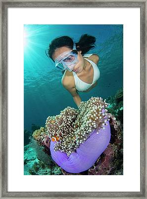 Free Diver With Anemonefish Framed Print by Scubazoo