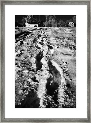 fresh footprints crossing deep snow in field towards small rural village of Forget Saskatchewan Cana Framed Print by Joe Fox