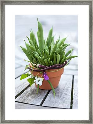 Fresh Green Beans In Pot Framed Print by Iris Richardson