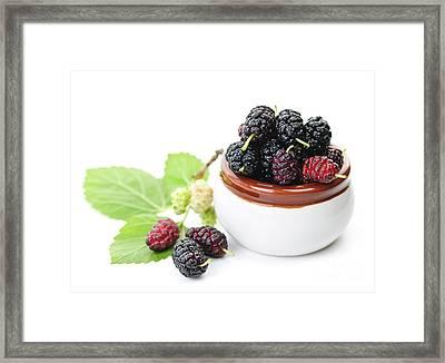 Fresh Mulberries Framed Print by Elena Elisseeva
