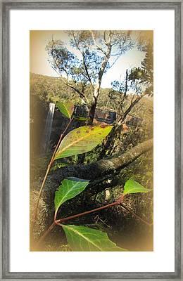 Frizroy Falls Sydney Framed Print by Henry Adams