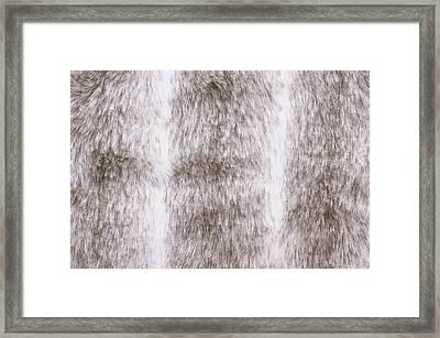 Fur Background Framed Print by Tom Gowanlock