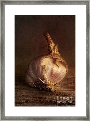 Garlic 2 Framed Print by Elena Nosyreva