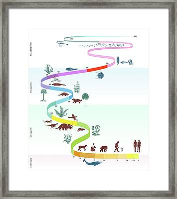 Geological Timescale And Life Framed Print by Gary Hincks