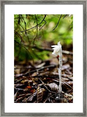 Ghost Flower Framed Print by Thomas R Fletcher